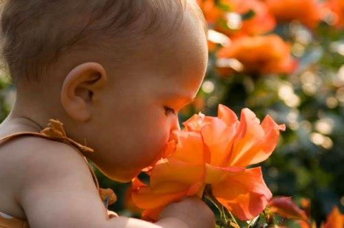 baby-flower1