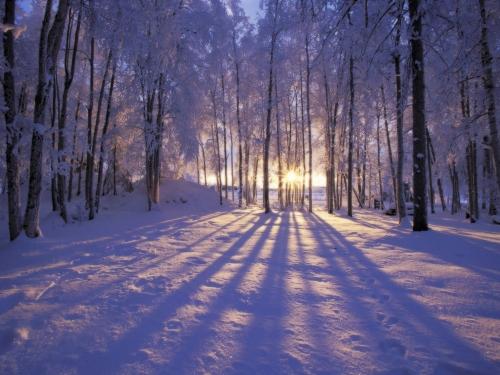9685-winter-scene-desktop-background_36599